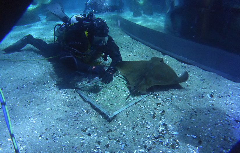 Diving student performing transect search at Aquarium