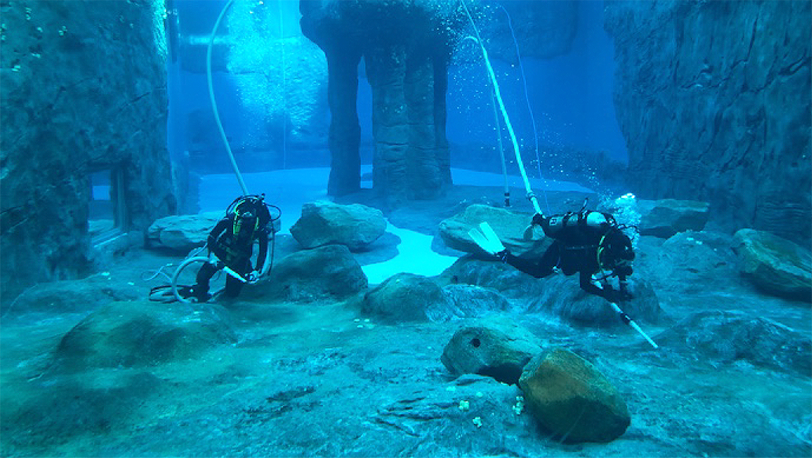 Aquarium Divers at Toronga Zoo
