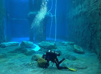 Taronga Zoo divers