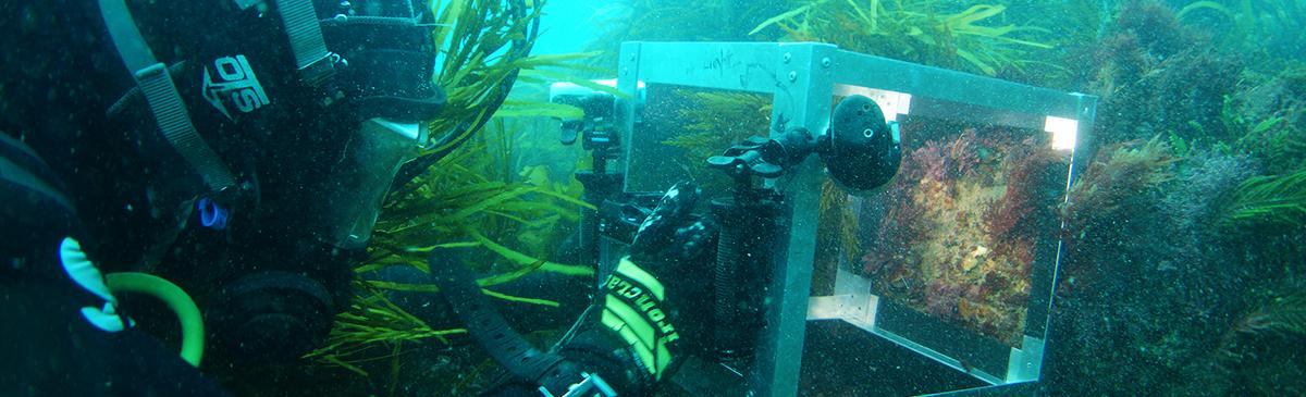 Scientific Diver Training