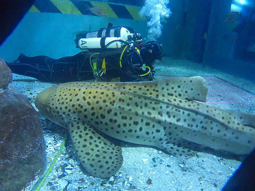 Aquarium diving student in tank