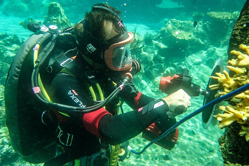 Aquarium diver at Sea World Gold Coast